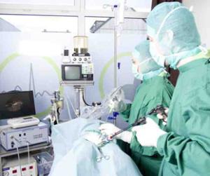 Endoskopische Kastration der Hündin