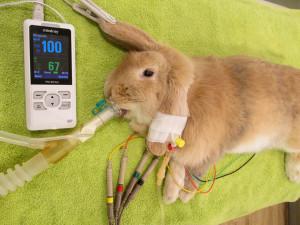 krankes-kaninchen