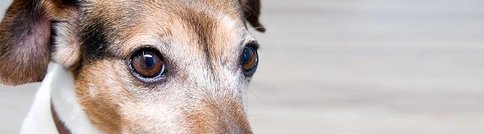 Tierarzt Osnabrück Tierärzte